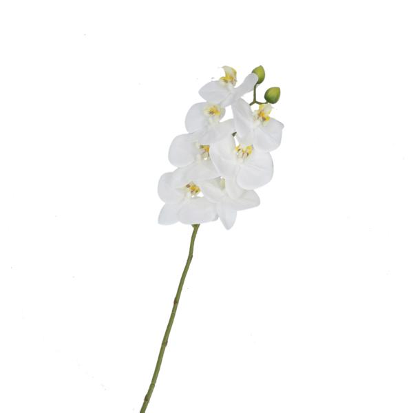 Орхидея WERONICA WHITE 58 см